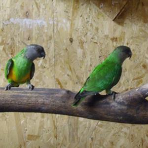 Vogelbörse Nrw